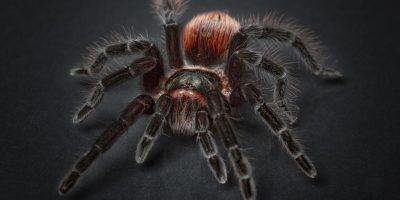 spider-1772769_1280